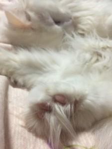 cat_foot