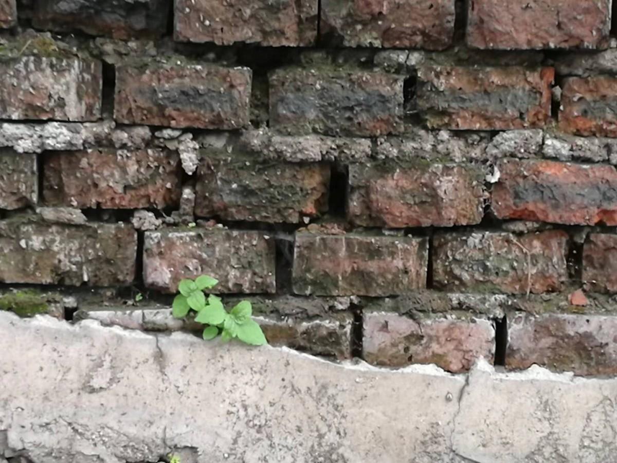 leaf_wall